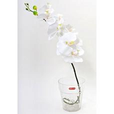 Орхидейница прозрачная 14.5см
