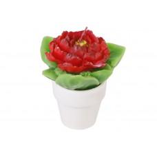 Декоративная свеча в керамическом горшочке Цветок 11.5см