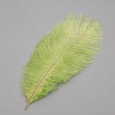 Страусиное перо 25-30 см зеленый (8501-002/green)